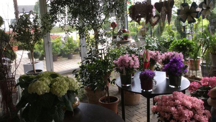 Blumen Baumschule Karl