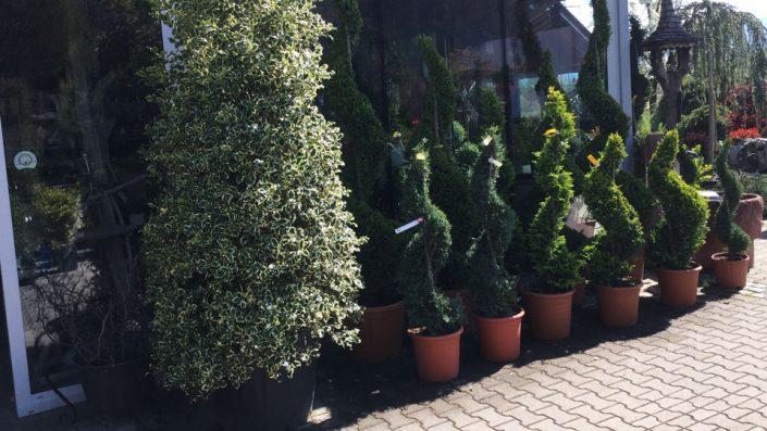 Gartenpflanzen Baumschule Karl