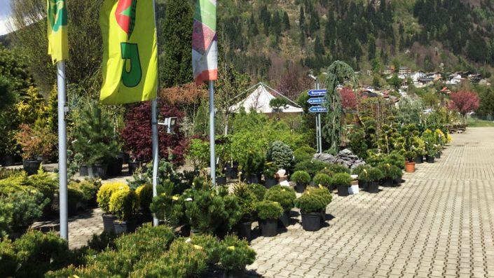 Außenbereich Baumschule Karl