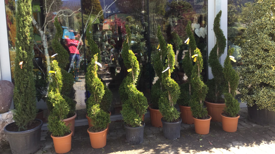 Pflanzenangebot Baumschule Karl