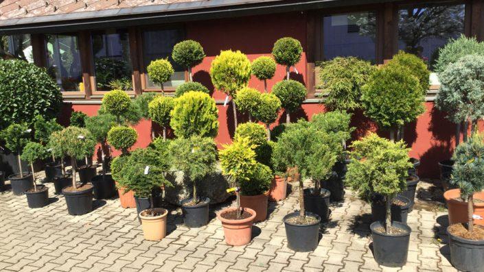 Bäume und Sträucher Baumschule Karl