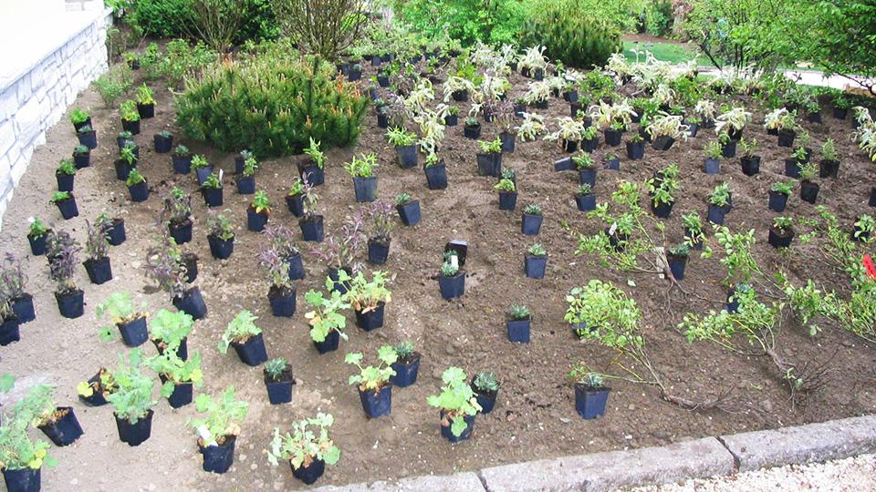 Beet anlegen und bepflanzen