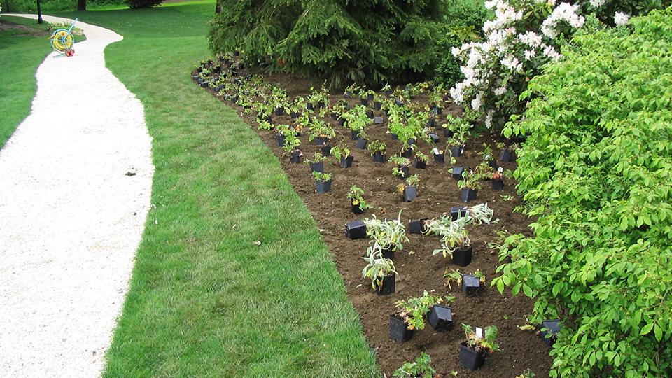 Beetbepflanzung